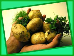 Картофель:готовим и лечимся