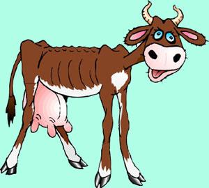 худая корова