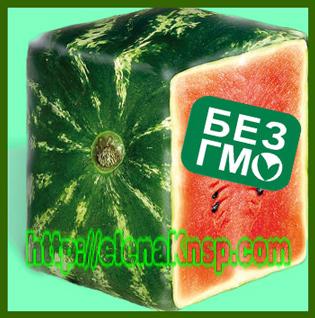 Влияние ГМО на здоровье человека