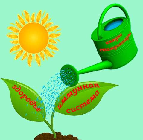 укрепить иммунитет, иммуностимуляторы, фитопрепараты, НСП, здоровье